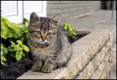 у котенка появились проплешины за ушами