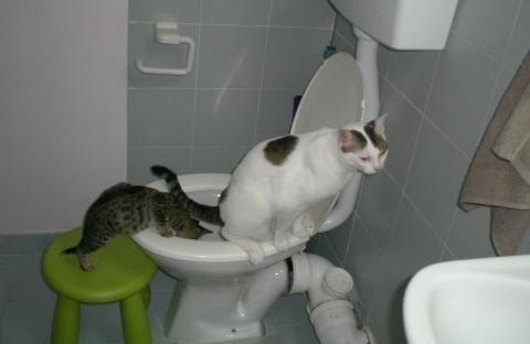 Что делать если захотелось в туалет