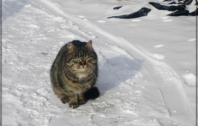 кот потерялся у девочки и зимовал в подвале дома зимой, как поймать его с помощью еды