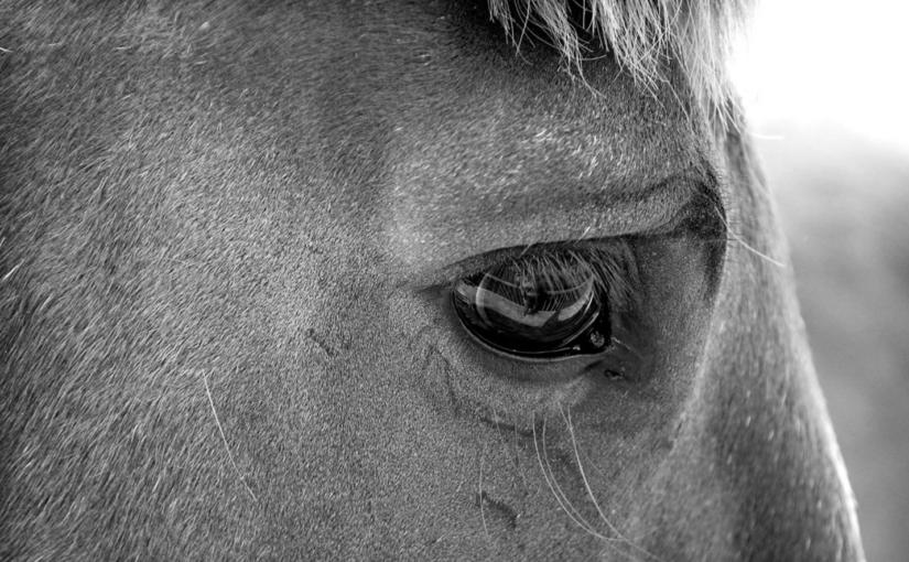 у лошади или коня болезнь, как вылечить в деревенских условиях села